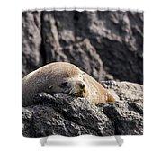Montague Island Seal Shower Curtain