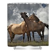 Montana Horses Shower Curtain