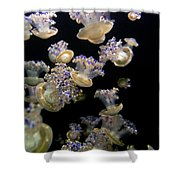 Monterey Aquarium Jellyfish Shower Curtain