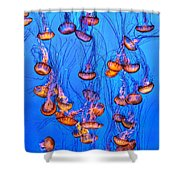 Monterey Jellies  Shower Curtain