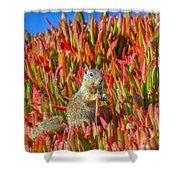 Monterey Squirrel Shower Curtain