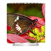 Montezuma Cattleheart Butterfly Shower Curtain