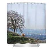 Moo Cow Grazing Shower Curtain