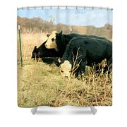 Moo Cow Munch Shower Curtain