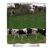 Moo Train Shower Curtain