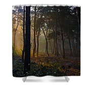 Moody Forest Happy Sun Shower Curtain