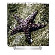 Moody Starfish I Shower Curtain