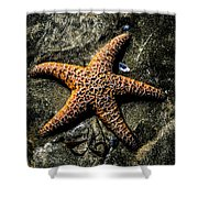 Moody Starfish II Shower Curtain