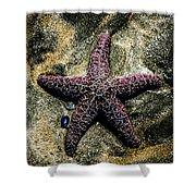 Moody Starfish IIi Shower Curtain