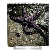 Moody Starfish Iv Shower Curtain