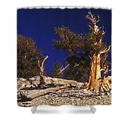 Moon And Bristlecone Pines Shower Curtain