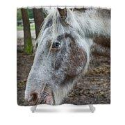 Moon Eyed Horse Shower Curtain