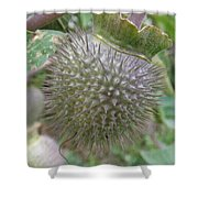 Moon Flower Seed Pod Shower Curtain