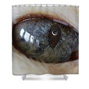 Moon In Cats Eye Shower Curtain