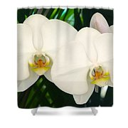 Moon Orchid Pair Shower Curtain