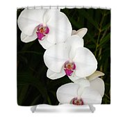 Moon Orchid With Purple Center Shower Curtain