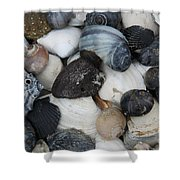 Moon Snails And Shells Still Life Shower Curtain