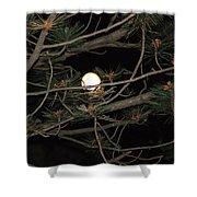 Moon Through Pines Shower Curtain