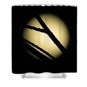 Moon Through The Branches Shower Curtain