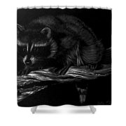 Moonlight Bandit Shower Curtain