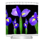 Moonlight Purple Flower Selection Romantic Lovely Valentine's Day Print Shower Curtain