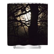 Moonlit Tree In The Forest Shower Curtain