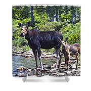 Moose And Baby 4 Shower Curtain