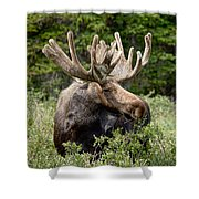 Moose Be Too Cool Shower Curtain