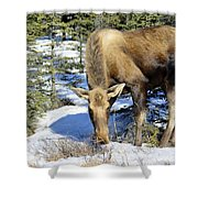Moose Connection Shower Curtain