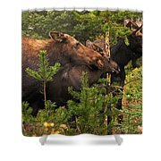 Moose Family At The Shredded Pine Shower Curtain