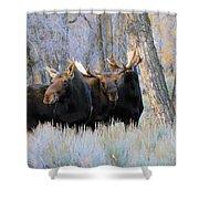 Moose Meeting Shower Curtain