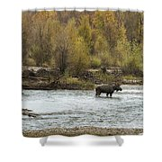 Moose Mid-stream - Grand Tetons Shower Curtain