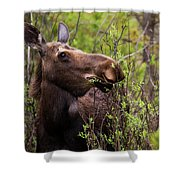 Moose Munch Shower Curtain