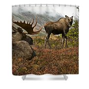 Moose Pair On Anchorage Hillside Shower Curtain