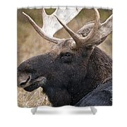 Moose Pictures 101 Shower Curtain
