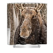 Moose Pictures 88 Shower Curtain