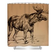 Moose Sketch Shower Curtain