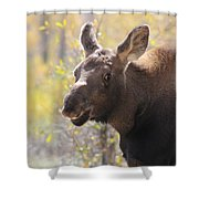 Moose Who Lost His Mother Shower Curtain
