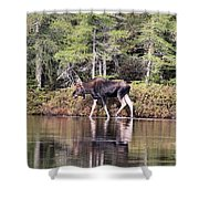 Moose_0586 Shower Curtain