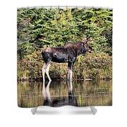 Moose_0609 Shower Curtain