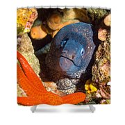Moray And Starfish Shower Curtain