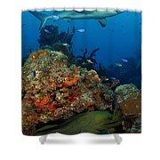 Moray Reef Shower Curtain