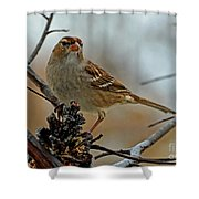 More Peanut Butter Please Card Size Shower Curtain