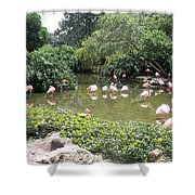 More Pink Flamingos Shower Curtain