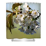More Spring Flowers Shower Curtain