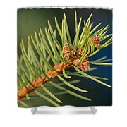 More Spruce Buds Shower Curtain