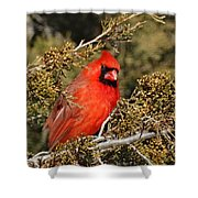 More Than A Red Head Shower Curtain