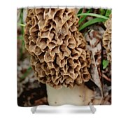 Morel-ly Awesome Shower Curtain