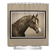 Morgan Horse Old Photo Fx Shower Curtain