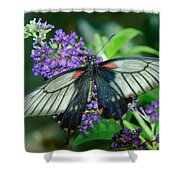Mormon Butterfly Shower Curtain